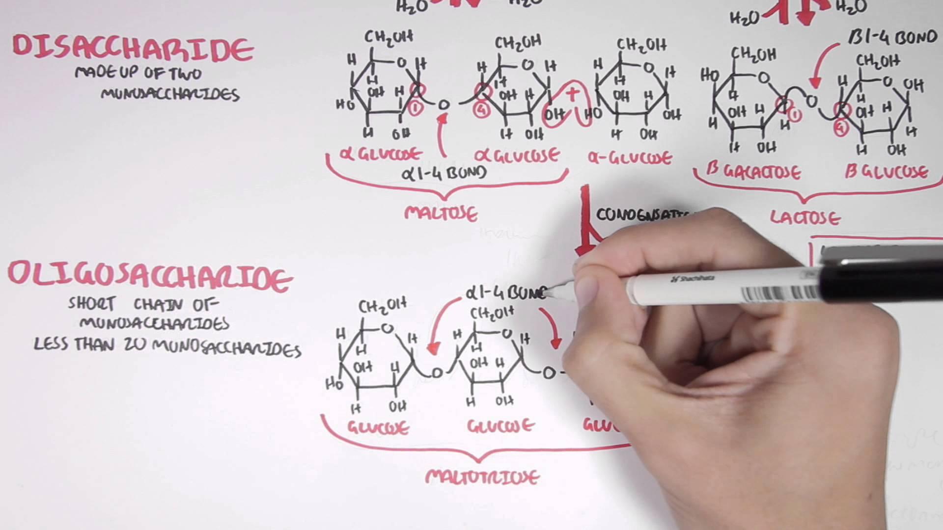 Biochemistry - BSc (Hons)